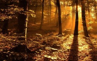 Photo free rays, forest, grass