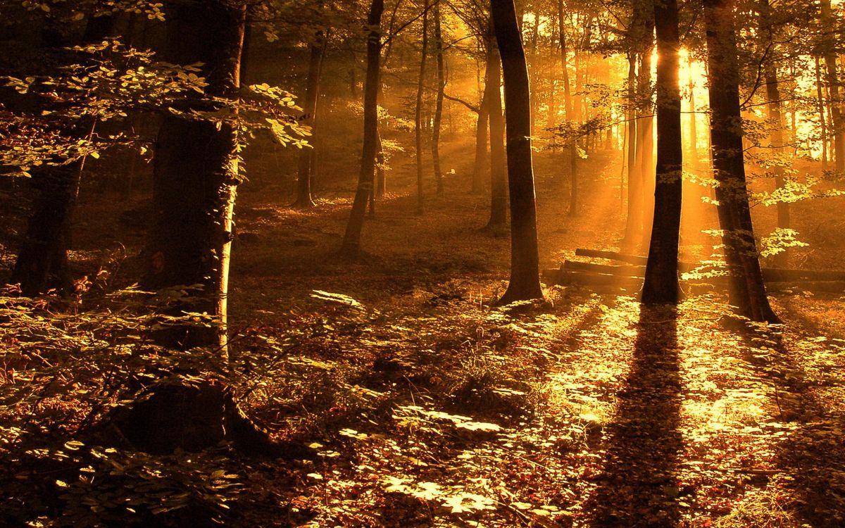 Фото бесплатно лес, деревья, трава, солнце, лучи, свет - на рабочий стол