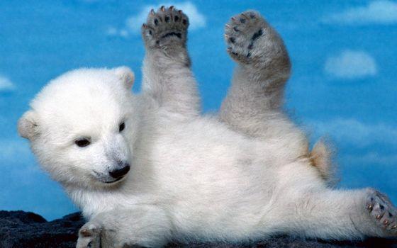 Photo free bear cub, white, polar