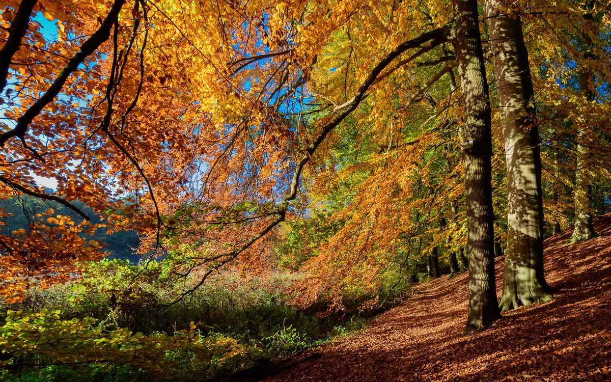 Обои осень, лес, деревья, природа на телефон | картинки природа - скачать