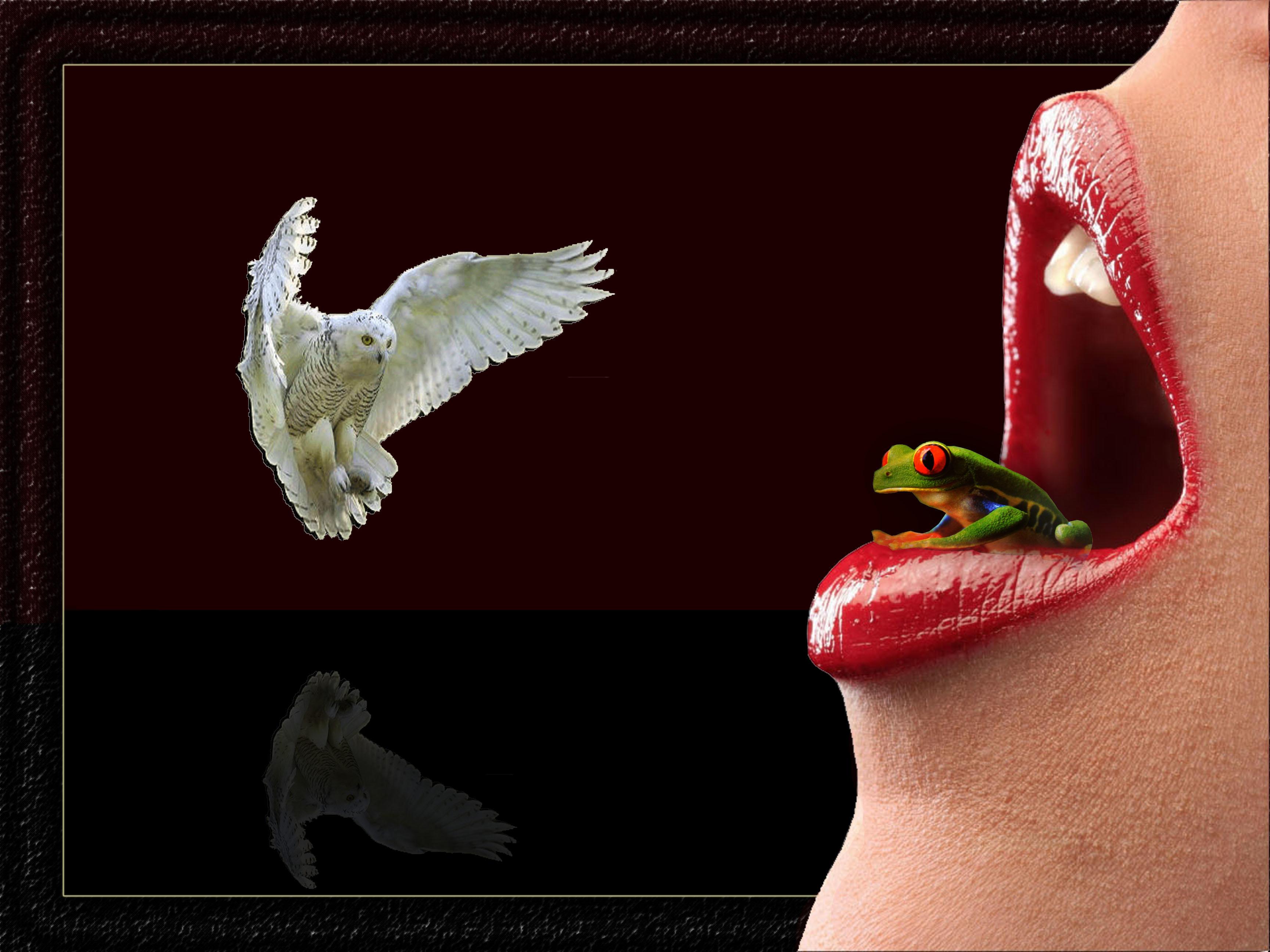 Обои рот, губы, лягушка, сова