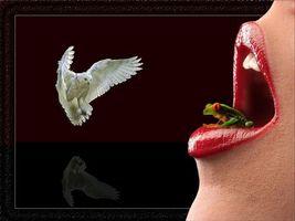 Бесплатные фото рот,губы,лягушка,сова,art