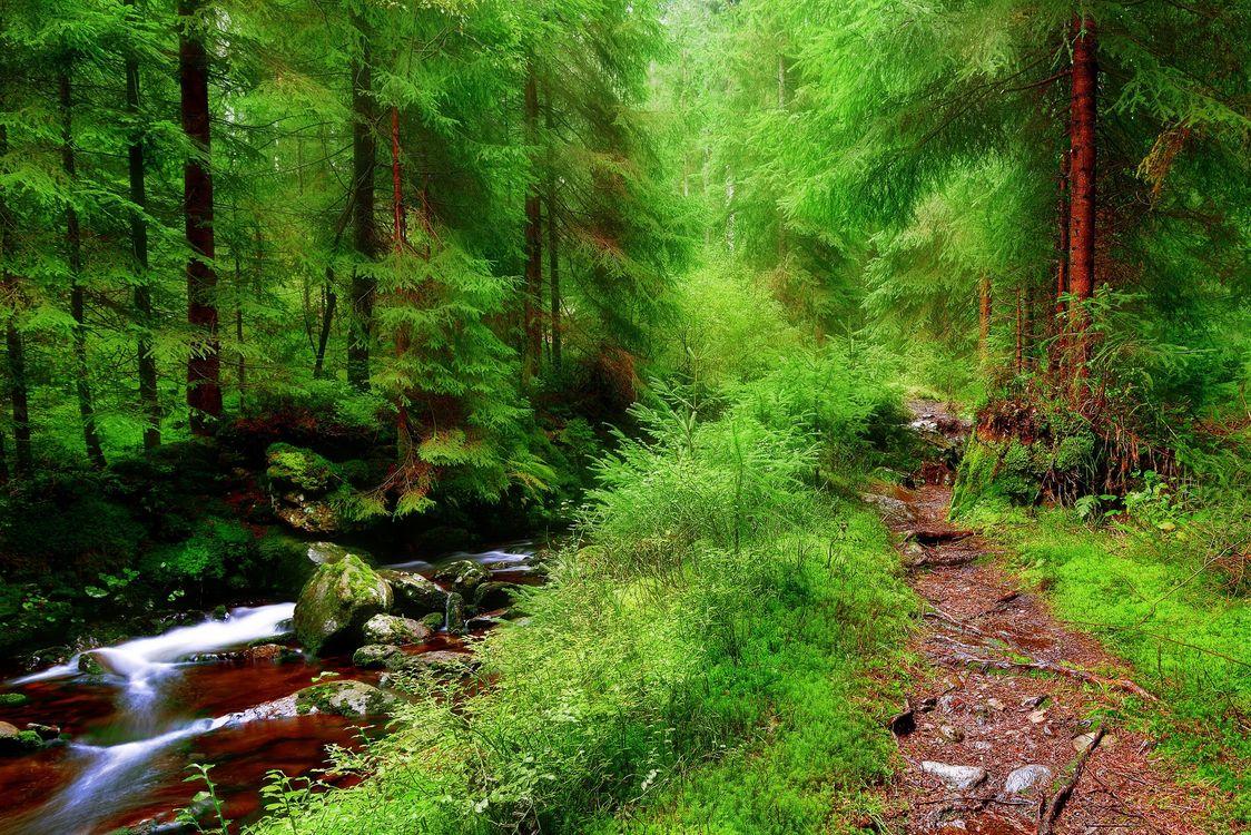 Фото бесплатно лес, деревья, речка, камни, тропинка, природа, природа