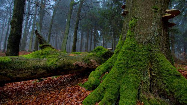 Фото бесплатно старое дерево, дремучий, лес