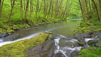 Бесплатные фото лес,деревья,кустарник,река,течение,камни,мох