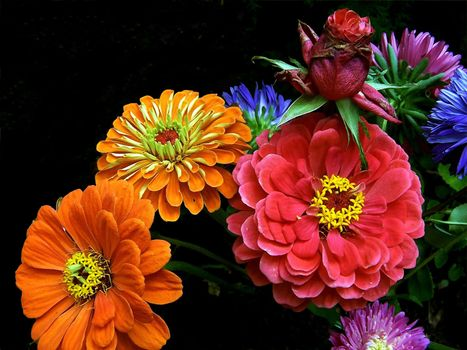 Обои цветы, букет на рабочий стол высокого качества