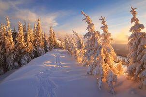 Заставки снег, пейзаж, тропинка