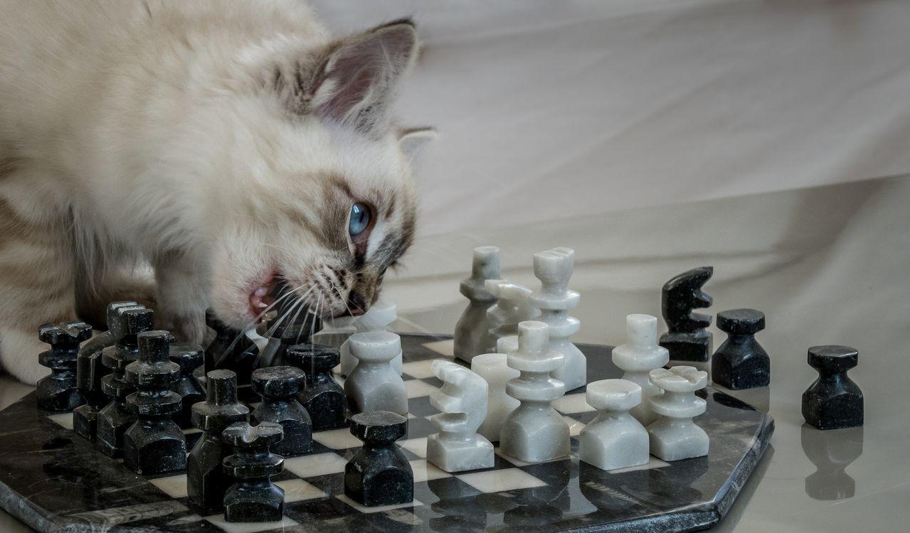 самом деле юморные фото про шахматы столичном