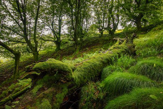 Фото бесплатно природа, склон, лес