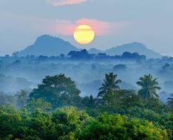 Заставки джунгли,лес,закат,солнце,горы