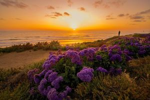 Бесплатные фото закат,море,берег,цветы,пейзаж