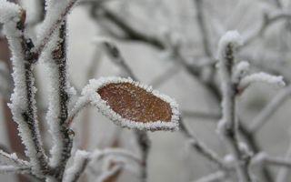 Бесплатные фото зима,мороз,дерево,ветви,лист,иней