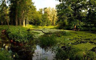 Бесплатные фото болото,тина,трава,растительность,деревья,лес