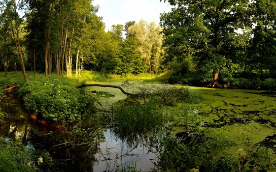 Фото бесплатно болото, тина, трава