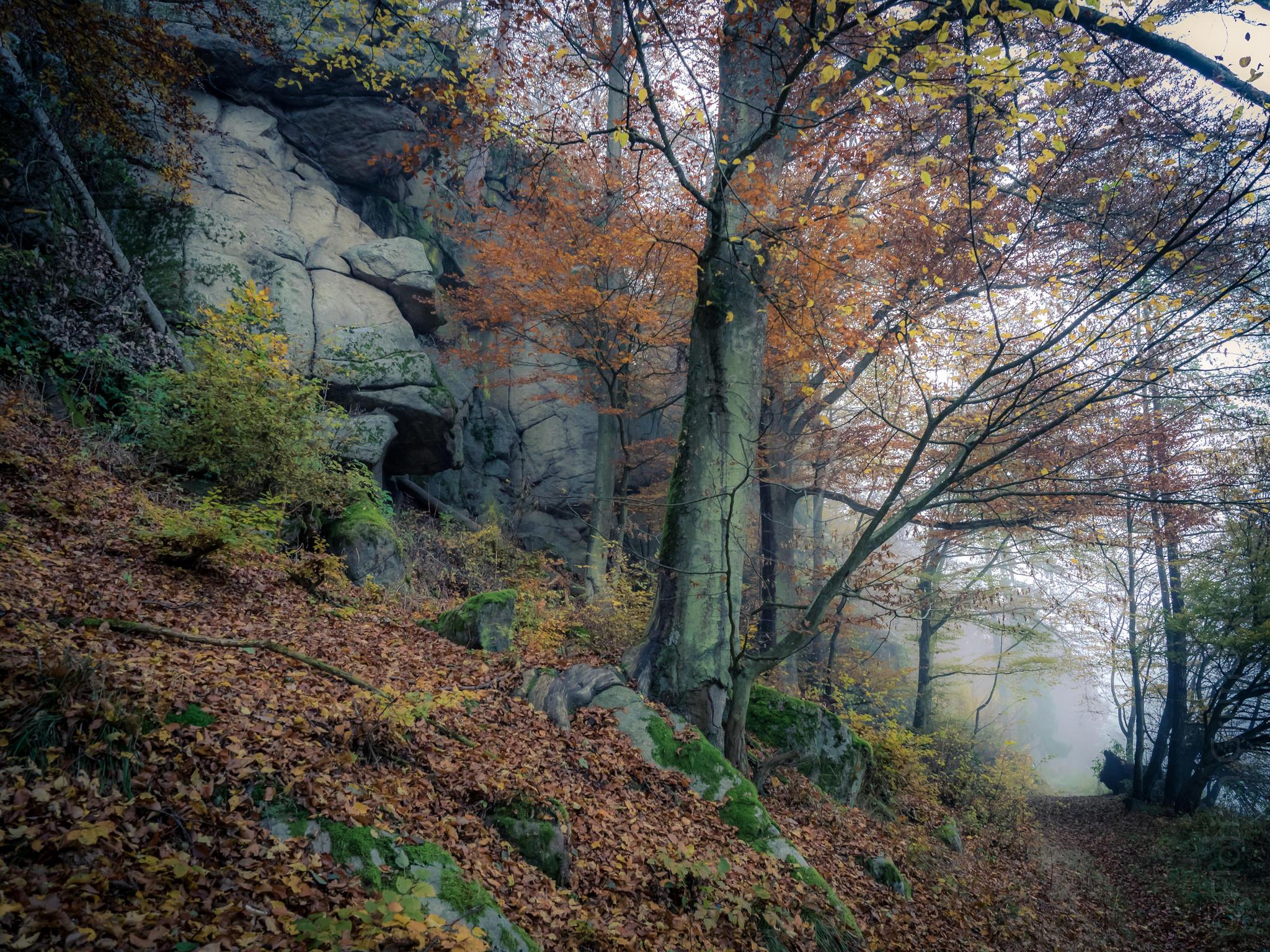обои осень, дорога, скалы, деревья картинки фото