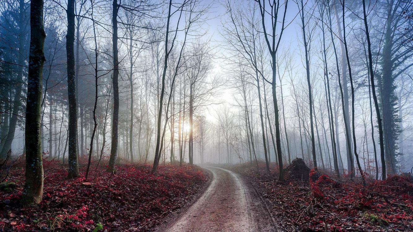 Фото бесплатно лес, деревья, дорога, туман, пейзажи