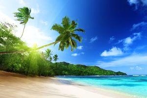 Бесплатные фото море,солнце,берег,пляж,пальмы,пейзаж