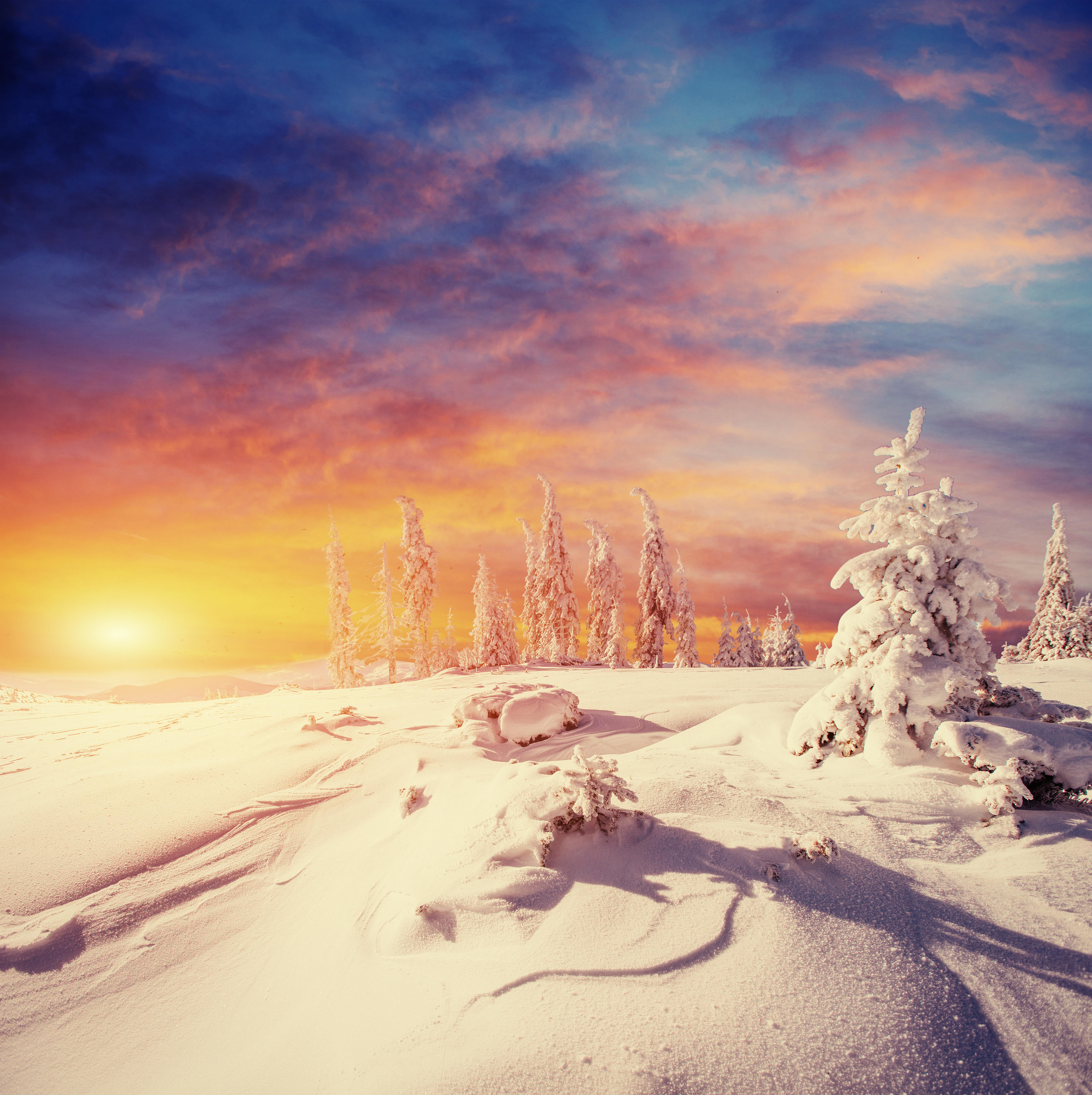 Обои зима, снег, ёлка, закат