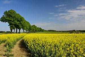 Фото бесплатно поле, дорога, деревья