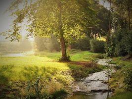 Фото бесплатно ручей, лес, лучи солнца