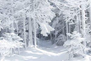 Фото бесплатно зимняя тропинка, лесная тропа, сугробы