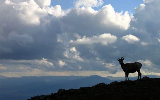 Заставки горы, козел, рога