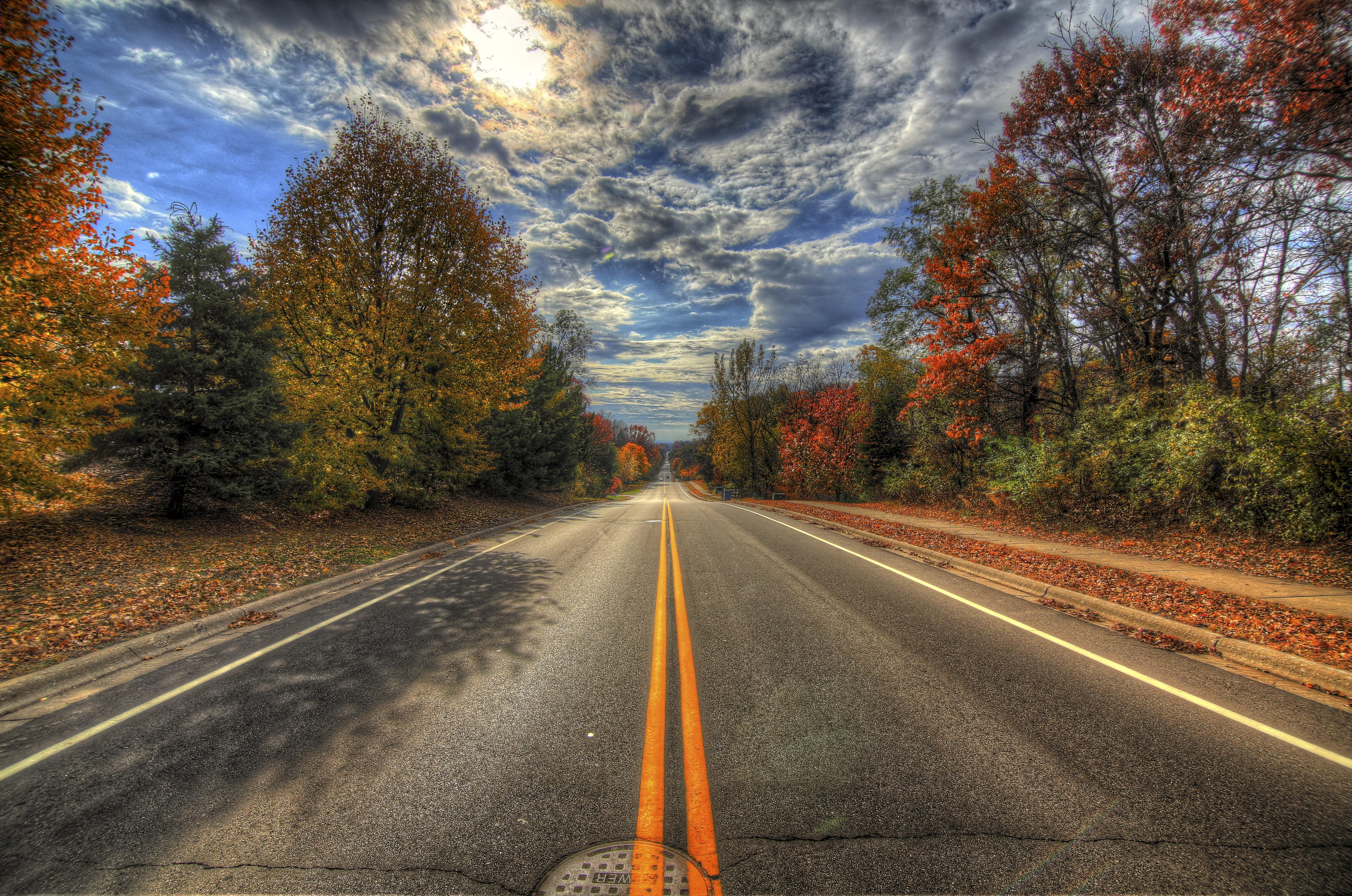 деревья осень дорога загрузить