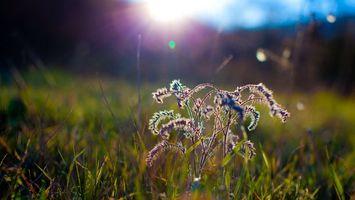 Обои трава, осень, увядшее растение, лучи солнца, природа