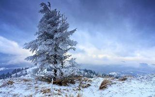 Бесплатные фото зима,горы,деревья,иней,трава,снег,облака