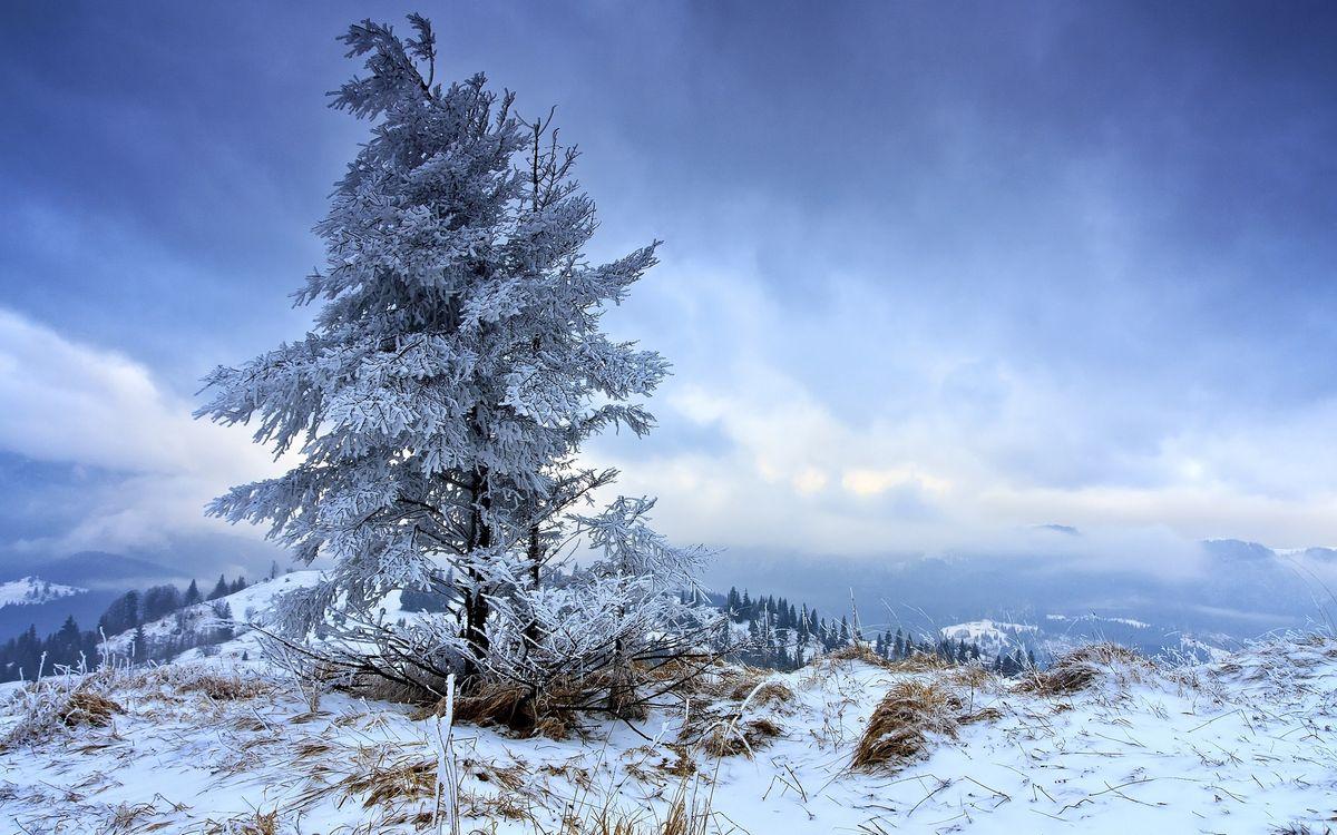 Фото бесплатно зима, горы, деревья, иней, трава, снег, облака, природа