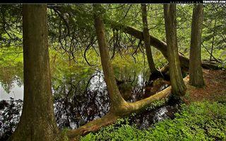 Фото бесплатно берег, озеро, отражение, деревья, трава, ветви