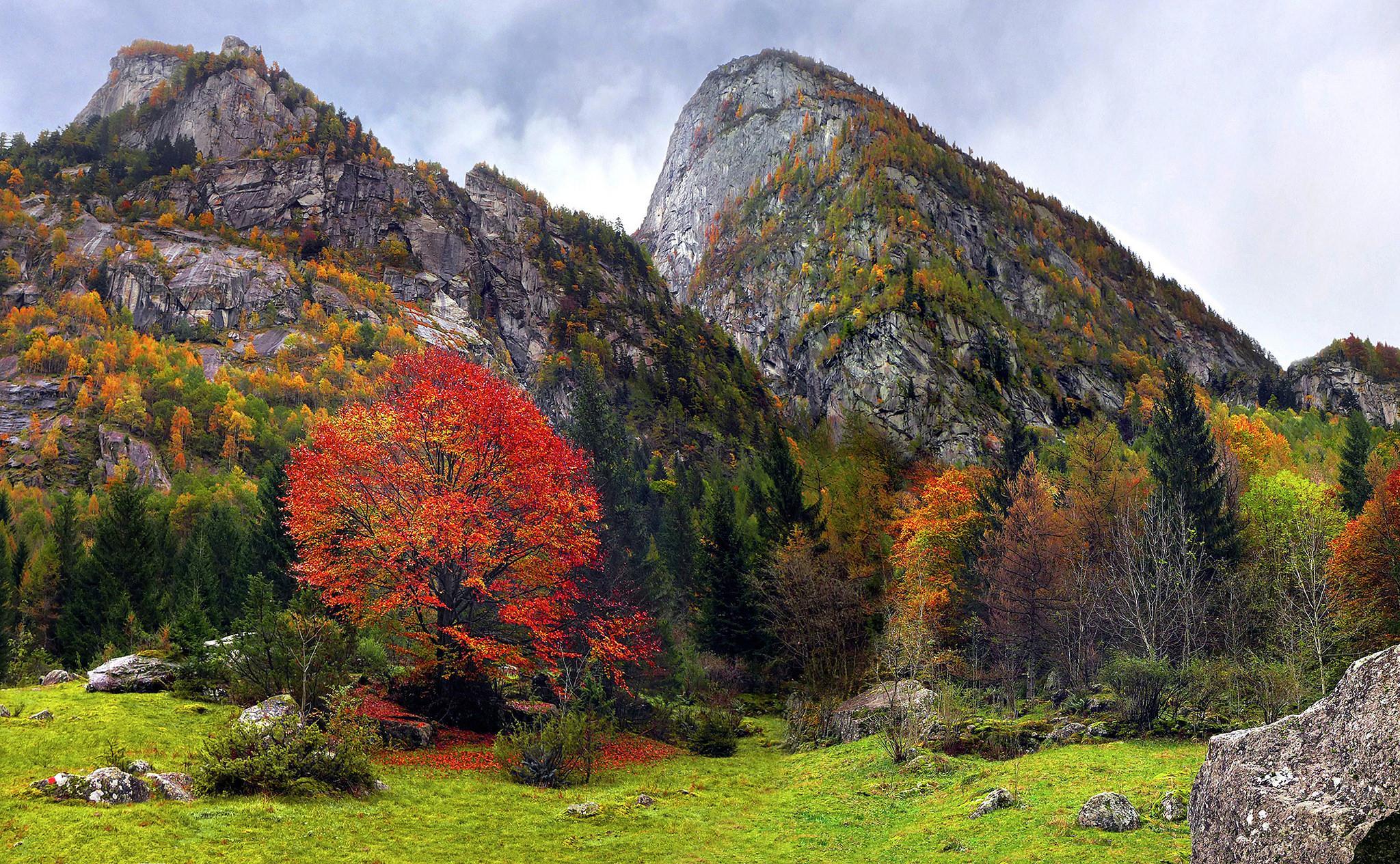 обои осень, горы, скалы, деревья картинки фото