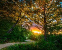 Бесплатные фото закат, лес, дорога, деревья, пейзаж