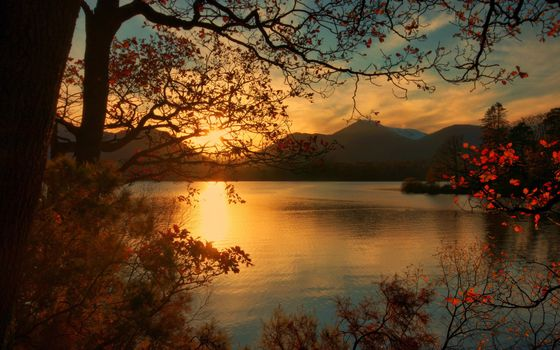 Заставки Закат, осень, деревья