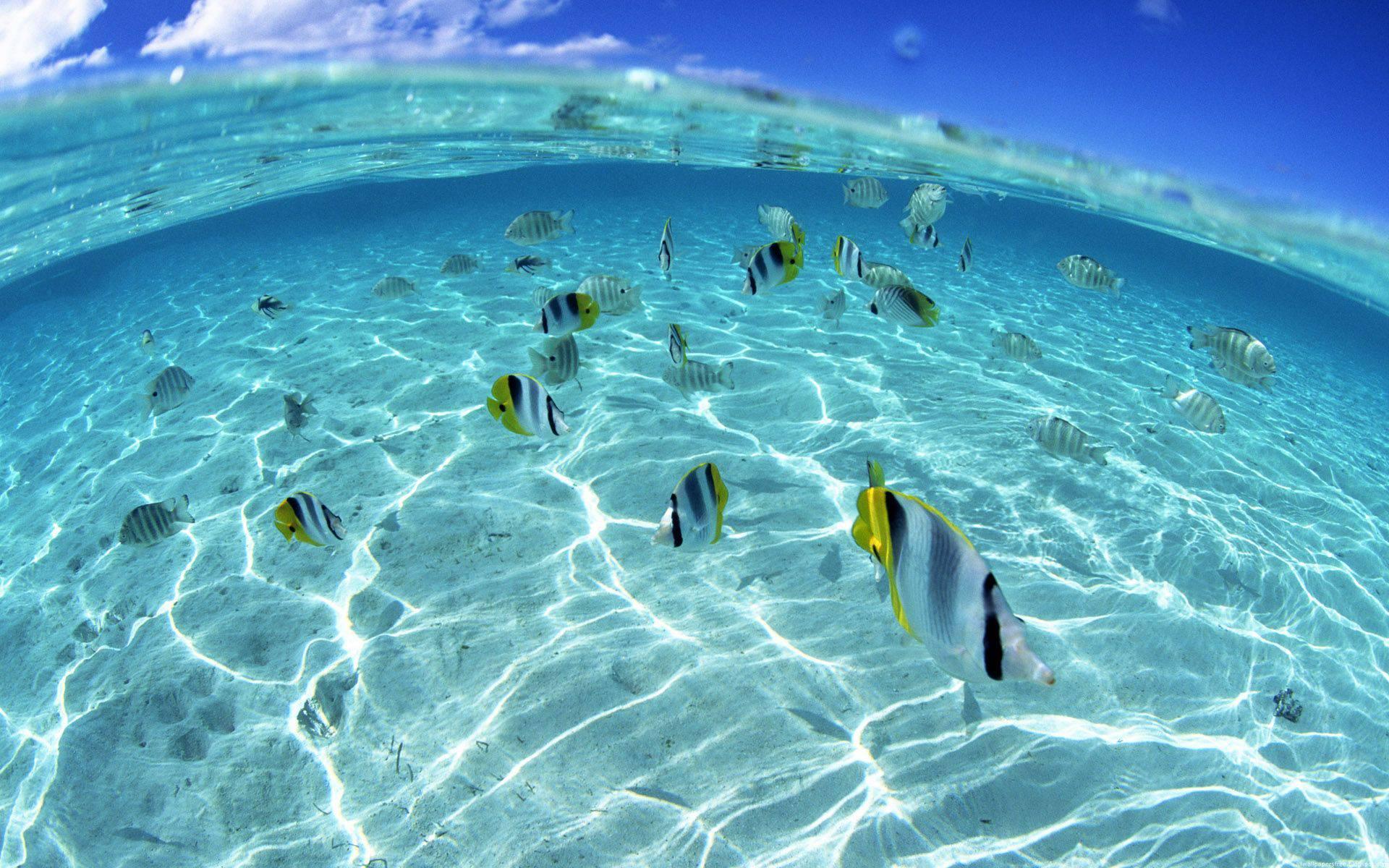 обои океан, рыбки, полосатые, плавники картинки фото