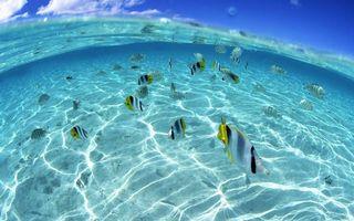 Заставки океан,рыбки,полосатые,плавники,хвосты,дно,песок