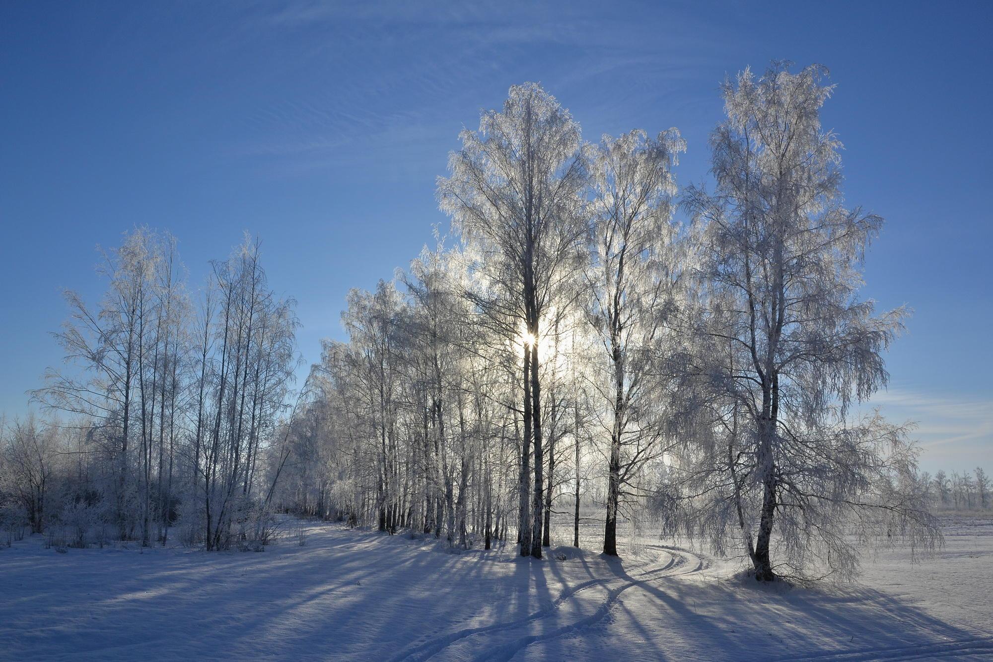 обои зима, снег, деревья, сугробы картинки фото