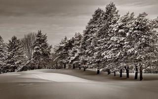Бесплатные фото зима,поле,сугробы,деревья,снег,небо
