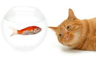 Фото бесплатно кот, рыжий, наблюдает, аквариум, вода, рыбка