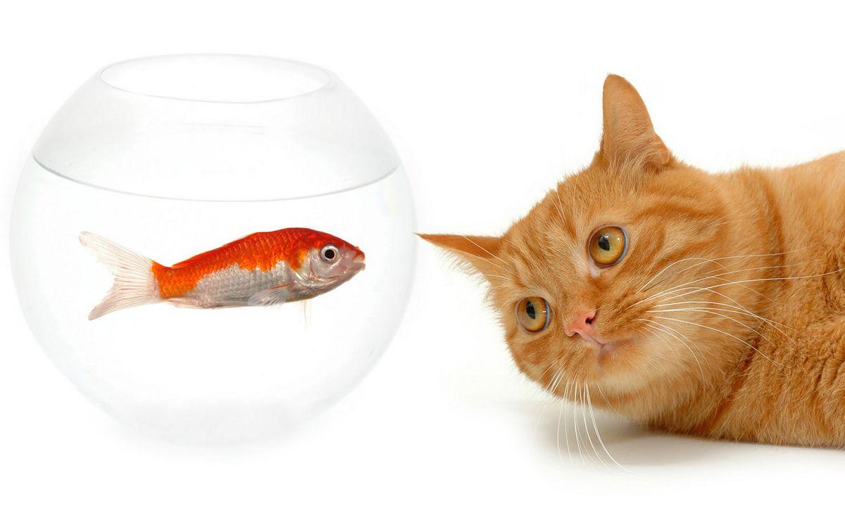 Фото бесплатно красная, рыба, аквариум - на рабочий стол