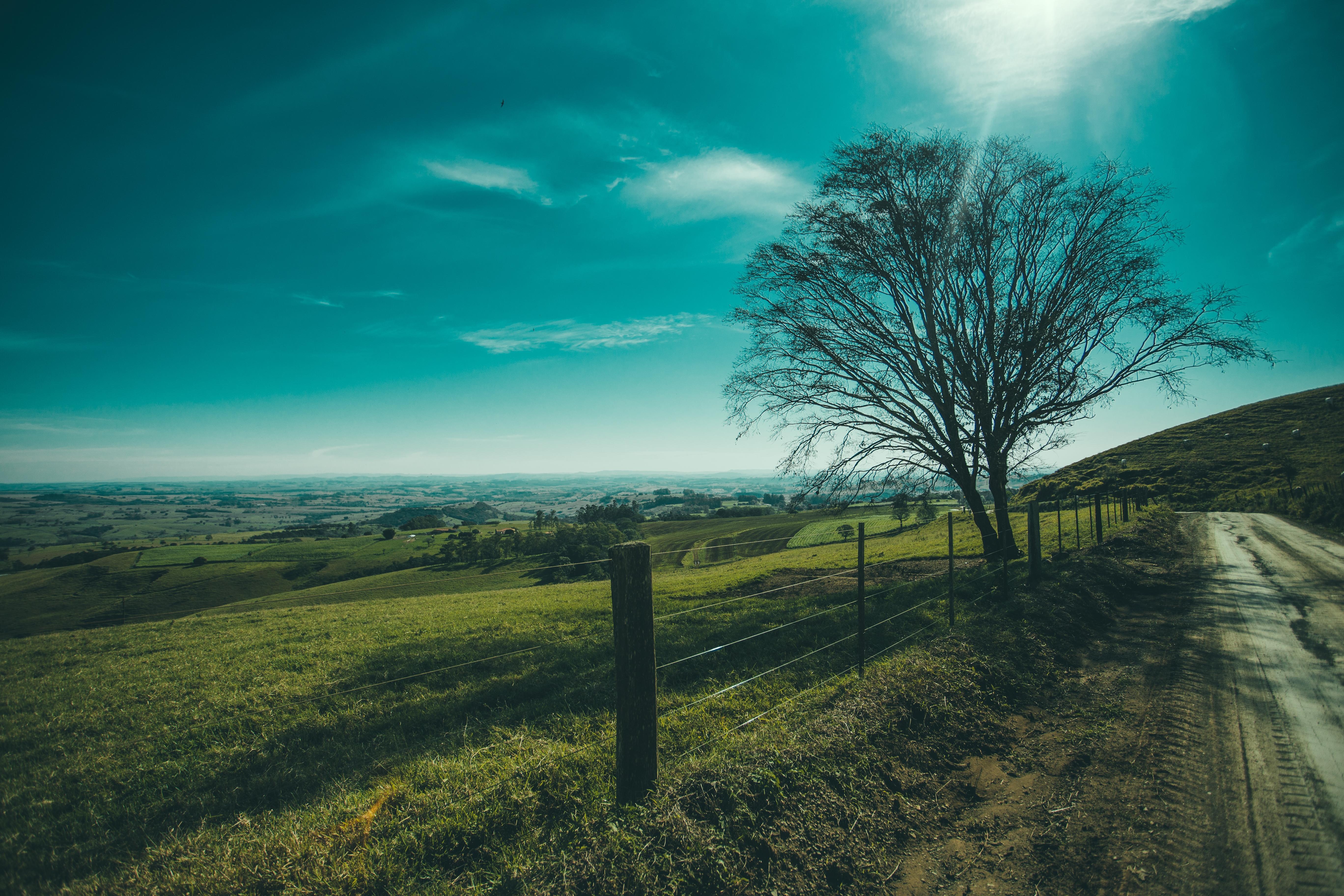 Обои поля, холмы, дорога, дерево