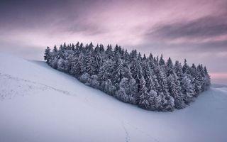 Фото бесплатно следы, деревья, небо