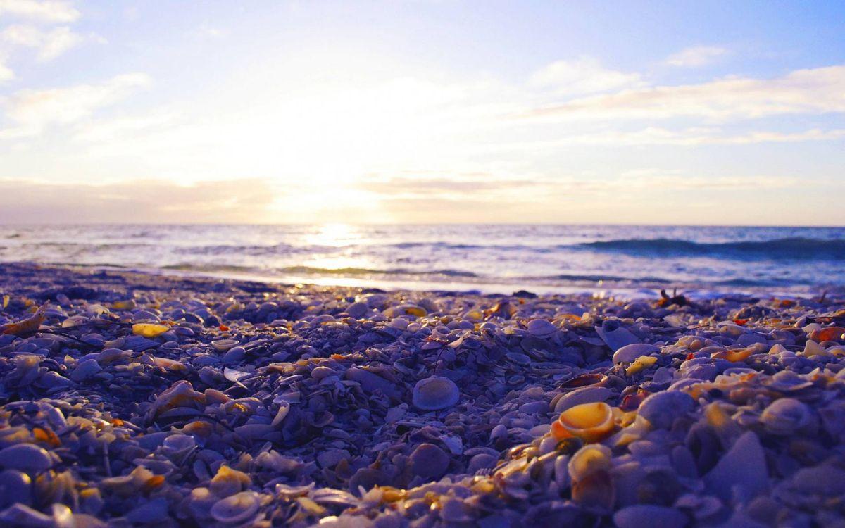 Фото бесплатно берег, ракушки, море, горизонт, небо, облака, солнце, пейзажи