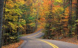 Фото бесплатно дорожная разметка, деревья, листья