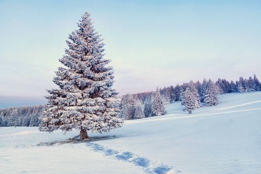 Фото бесплатно одинокая елка, сугробы, снег