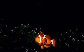 Бесплатные фото рыбка,оранжевая,полосы белые,плавники,хвост,водоросли