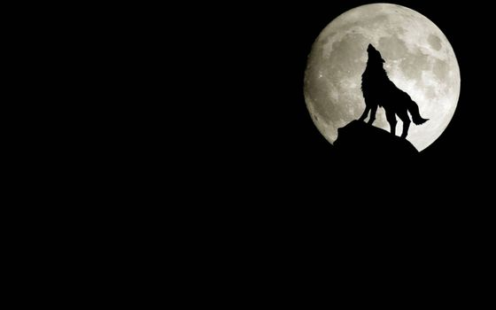 Фото бесплатно ночь, скала, волк воет