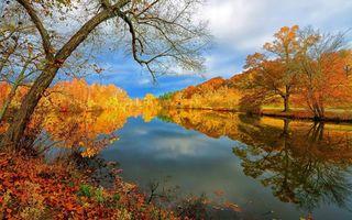 Бесплатные фото осень,река,деревья,листопад