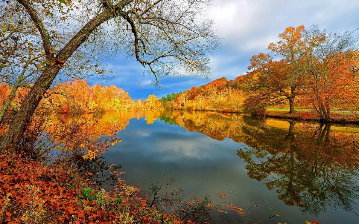 Фото бесплатно осень, река, деревья, листопад, пейзажи