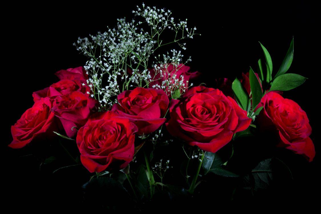 Обои роза, розы, цветы, флора, букет, чёрный фон на телефон | картинки цветы